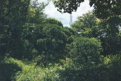 日本庭園協会創立100周年記念事業伝法院庭園修復基礎研修