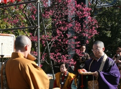 毎年針供養の頃には梅が咲き誇る。